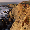 Bodega Head by Soli Deo Gloria Wilderness And Wildlife Photography