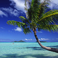 Bora Bora, Palm Tree by Ron Dahlquist - Printscapes