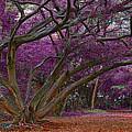 Botanic Garden by Galeria Trompiz