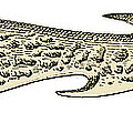 Bronze Age Barbed Point Harpoon by Science Source