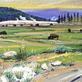 Buffaloes In Yellowstone by Donald Maier