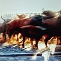Bull Run by Rafa Rivas