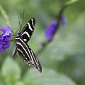 Butterfly by Billy Bateman