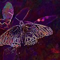 Butterfly Insect Wing Wildlife Bug  by PixBreak Art