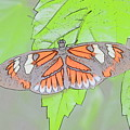 Butterfly by Robert Nelson