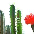 Cactus Plants by Dia Karanouh