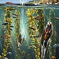 California Kelp Forest by Jim Dowdalls