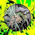 Cannabis 420 Collection by Marvin Blaine