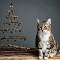 Cat Christmas by Nailia Schwarz