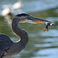 Catch Of The Day by Eric Johansen