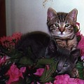 2 Cats In The Flowers by Katherine  Berlin