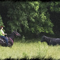Cattle Round Up And Drive In West Virginia by Dan Friend