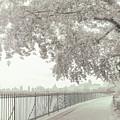Central Park Reservoir by Jessica Jenney