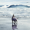 Chihuahua At The Beach by David Rogers