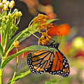 Clinging Butterfly by Matalyn Gardner