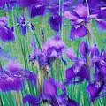 Close-up Of Purple Flowers by Panoramic Images