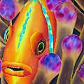 Clown Fish by Daniel Jean-Baptiste