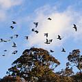 Cockatoos - Canberra - Australia by Steven Ralser