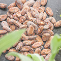 Cocoa Beans by D R