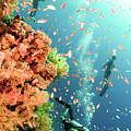 Coral Reef  by Hagai Nativ