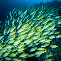 Coral Reef Scene by Dave Fleetham - Printscapes