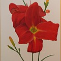 2 Daylillies In Red by Serina Wells
