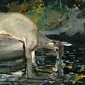 Deer Drinking by Winslow Homer