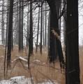 2 Deers by Sara Stevenson