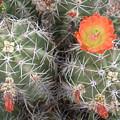 Desert Bloom by Robert Cunningham