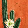 Desert Delight by Marilyn Smith