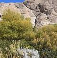 Desert Landscape by Lisa Dunn
