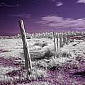 Desertic Landscape by Galeria Trompiz