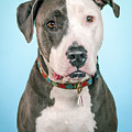 Cara by Pit Bull Headshots by Headshots Melrose