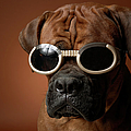 Dog Wearing Sunglasses by Chris Amaral