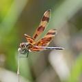 Dragon Fly by Rob Hans