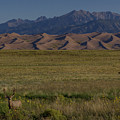Eight Point Buck In The Grass Lands Of The Great Sand Dunes by Bridget Calip