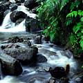 El Yunque Waterfall by Thomas R Fletcher