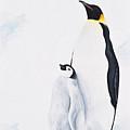 Emperor Penguin by Andrea Angulo