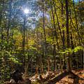 Fall In Indiana by Walt Sterneman
