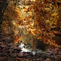 Fall Reflected by Jessica Jenney