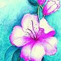 Fantasy Flowers by Hazel Holland