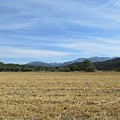 Harvested Field In Fornes by Chani Demuijlder