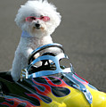Fifi Goes For A Ride by Michael Ledray