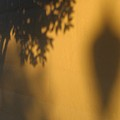 Film Noir Alfred Hitchcock Shadow Of A Doubt 1943 1 Shadow Wall Casa Grande Arizona 2004 by David Lee Guss
