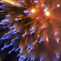 Fireworks Abstract by Thomas Morris