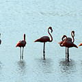 Flamingo Family by Galeria Trompiz