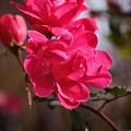 Flora No. 2 by Sandy Taylor