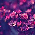 flower Image by MSA Siddiqui