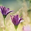 Flower On Summer Meadow by Nailia Schwarz