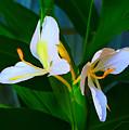 Flowering Plant by Michael C Crane